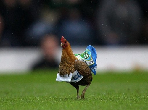 Blackburn-Rovers-Chicken.jpg